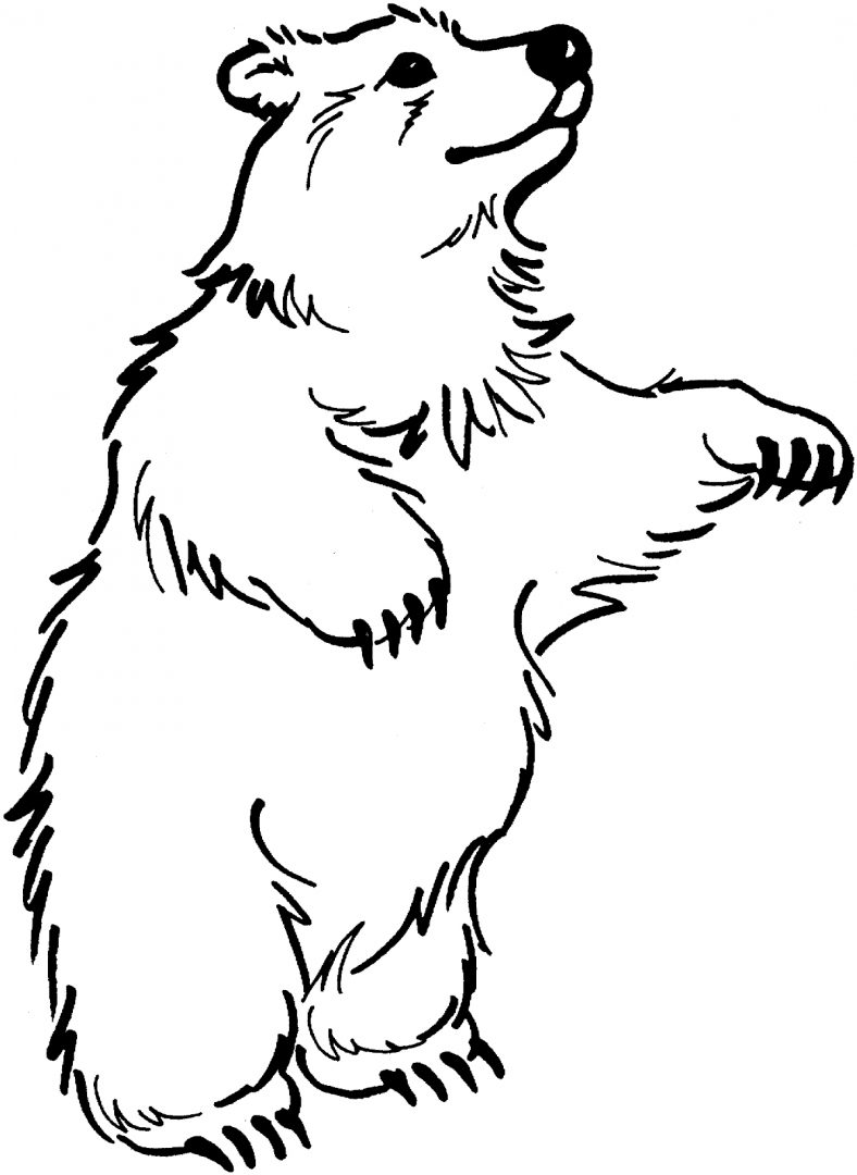 Quierodibujos   i dibujo Oso Peluche further Crazy Drawing Ideas in addition Animals additionally 370984088028724012 further Printable Paper Bag Puppet Template. on scary cartoon polar bear