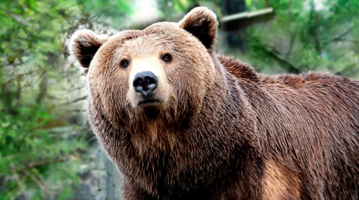 Oso polar en peligro de extincion yahoo dating 1