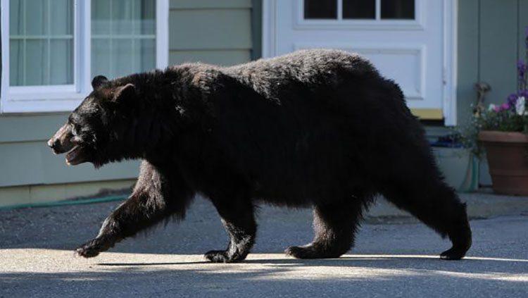 Galera de imgenes Mitos sobre los osos
