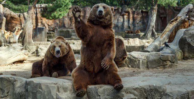 Медвед  Lurkmore