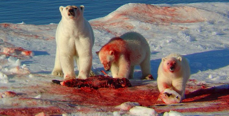 Worksheet. Alimentacin de los osos